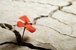 Drie lessen over verdriet van Femke van der Laan