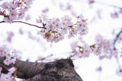 Mindfulness – van binnen uit